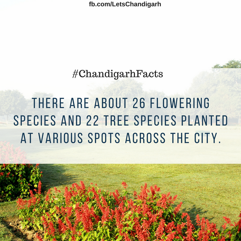 Several flowering and tree species are planted at various places in Chandigarh.